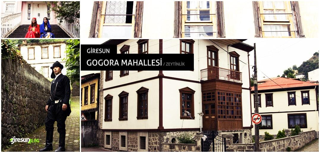 Giresun'un Zeytinlik'i: Gogora Mahallesi 1